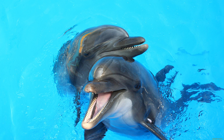 самые красивые дельфины в мире фото ещё